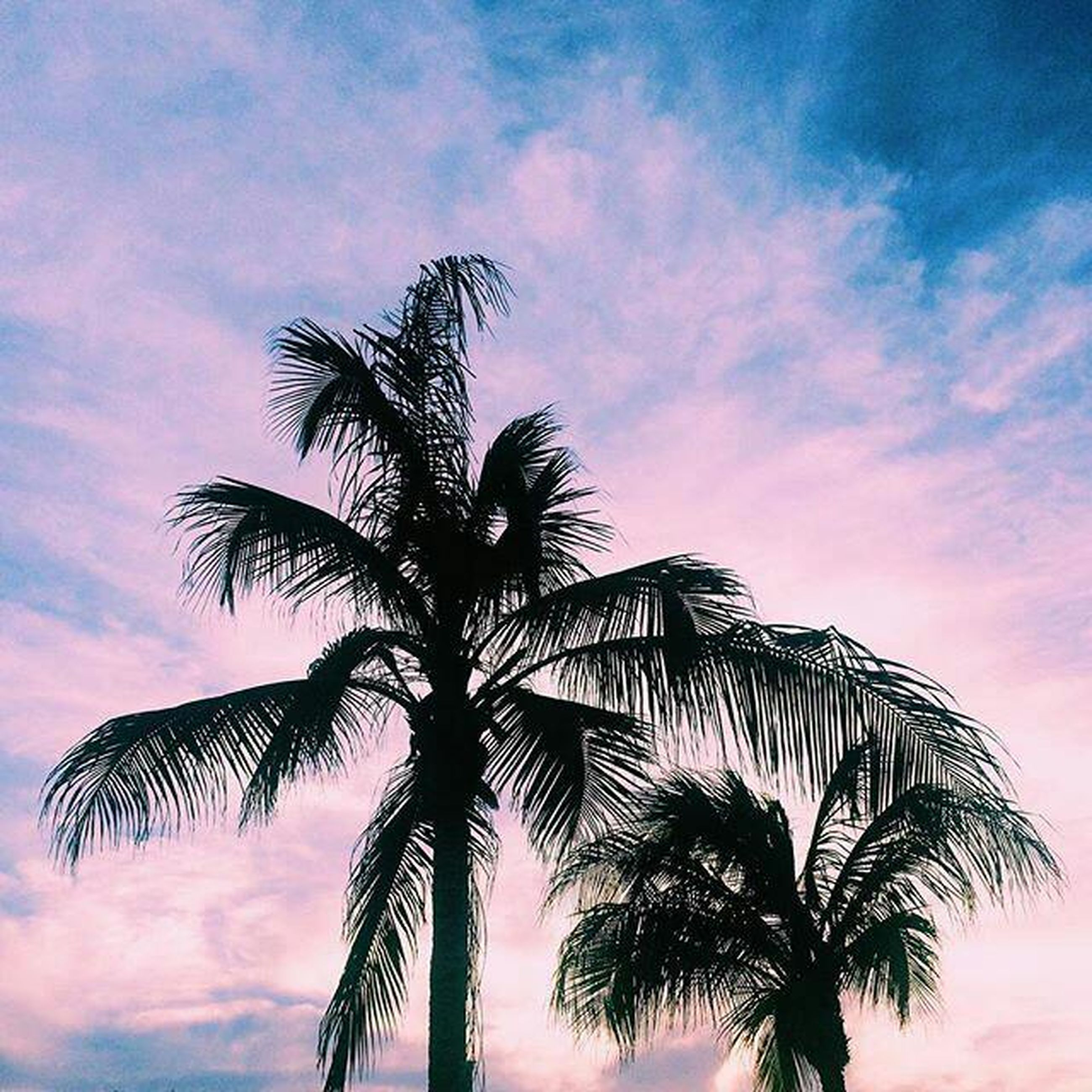 palm tree, tree, low angle view, sky, tree trunk, beauty in nature, scenics, silhouette, tropical climate, nature, sunset, tranquility, outdoors, cloud - sky, growth, summer, no people, day, blue, vacations