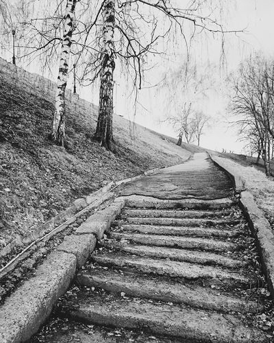 Mobilephotography Streetphotography Blackandwhite Monochrome Streetphoto_bw Old Stairs Trees