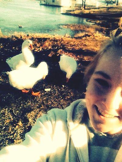 Duck selfie Beautiful Day Enjoying The Sun Geese Feeding Animals