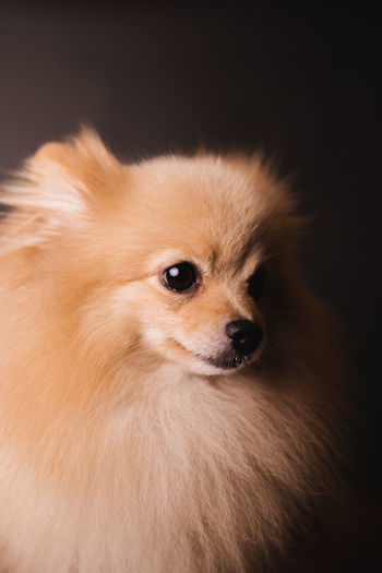 Portrait of a