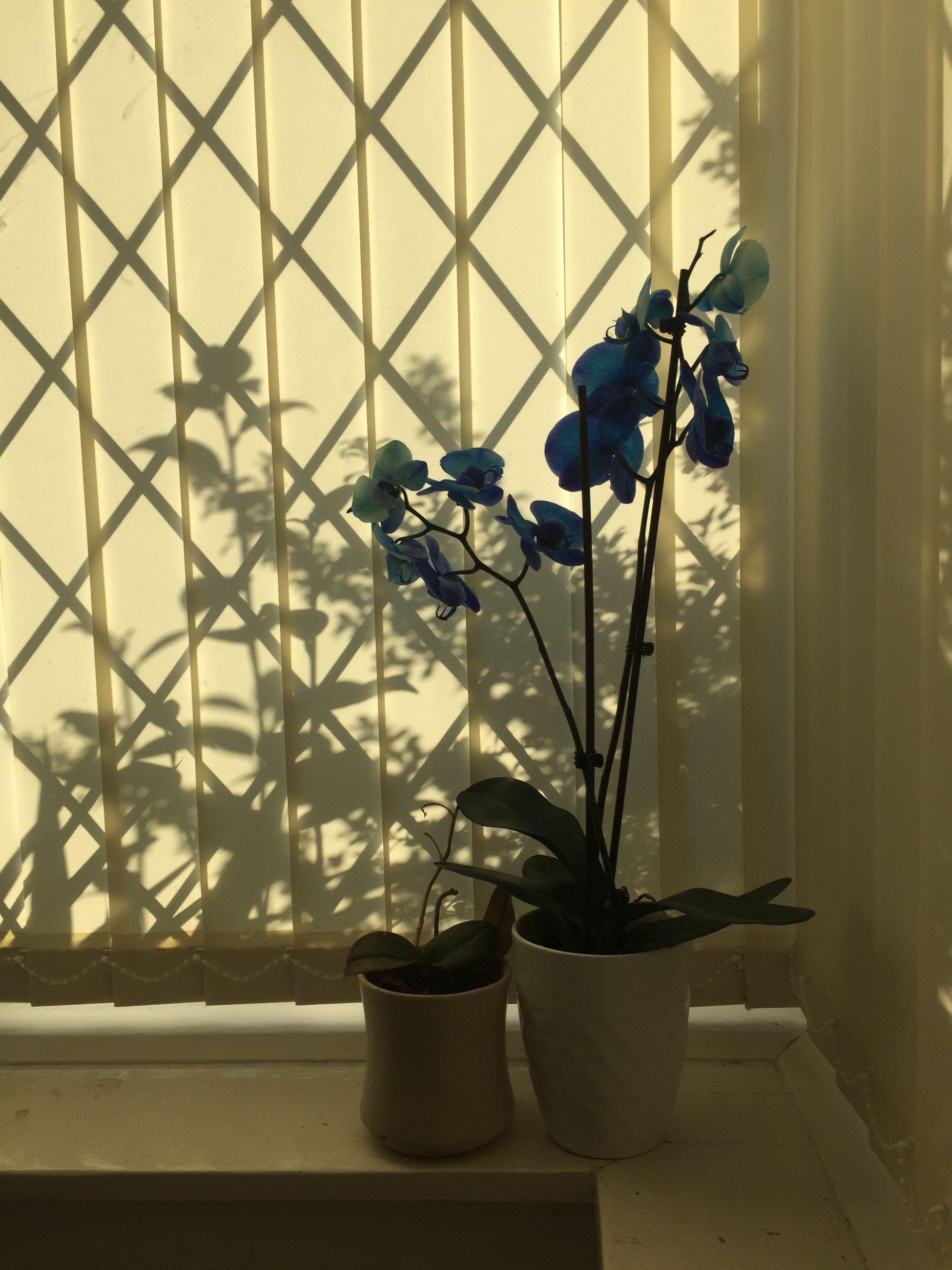 no people, growth, plant, nature, indoors, home interior, day, close-up, flower, beauty in nature
