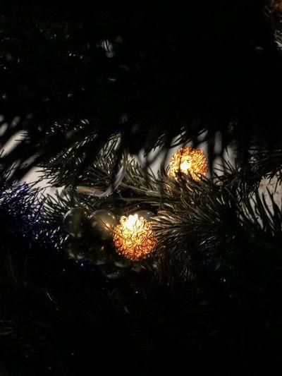 Close-up of illuminated wet plants at night