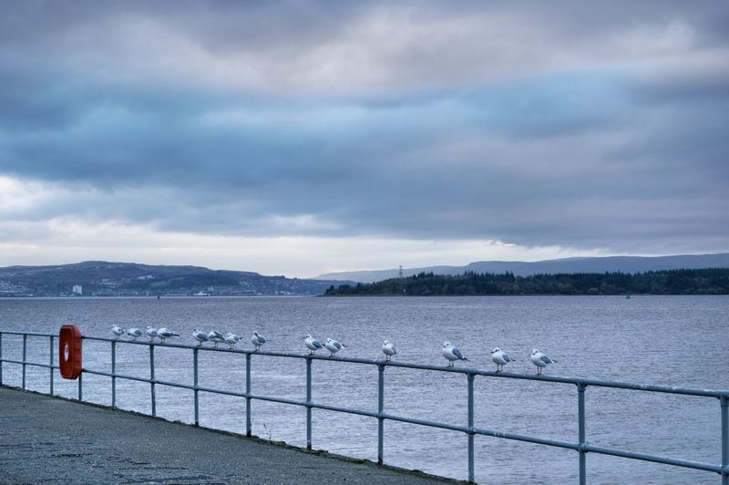 Birds Collection Clyde Clydeside River Clyde River View Riverside Beauty In Nature Birds Birds Collections Birds Relaxing Birds Resting Birds_collection Cloud - Sky Day Mountain Nature No People Outdoors Railing Scenics Sea Sky Tranquil Scene Tranquility Water