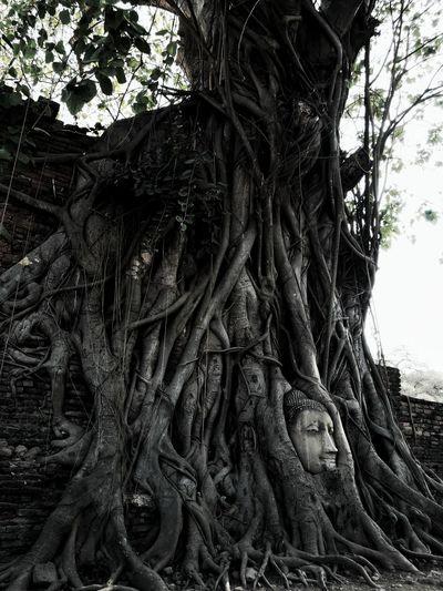Amazing Thailand Watmahathat Ayutthaya