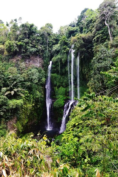 Landscape Welcome To The Jungle EyeEm Best Shots - Nature The Week Of Eyeem Deceptively Simple Wonderful View Sekumpul  EyeEm Indonesia EyeEm Waterfalls Traveling