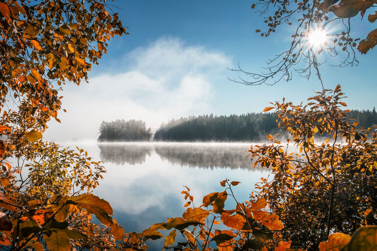 Scenic view with fall colors and peaceful lake at autumn morning in Liesjärvi National Park, Finland Autumn Fall Colors National Park Sunlight Autumn Beauty In Nature Blue Branch Fog Foggy Foreground Idyllic Lake Landscape Leaf Mist Nature No People Outdoors Scenics Sky Sun Rays Tranquil Scene Tranquility Water Perspectives On Nature