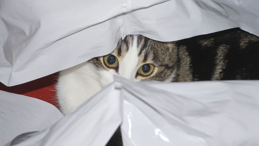 Close-up of cat hiding