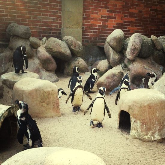 Pinguins  Zoo Cutest Thing Ever! Animals