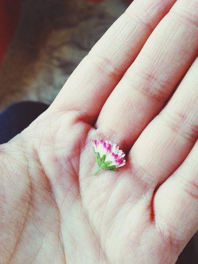 Esos pequeños detalles que te da la vida :) Pequeños Detalles