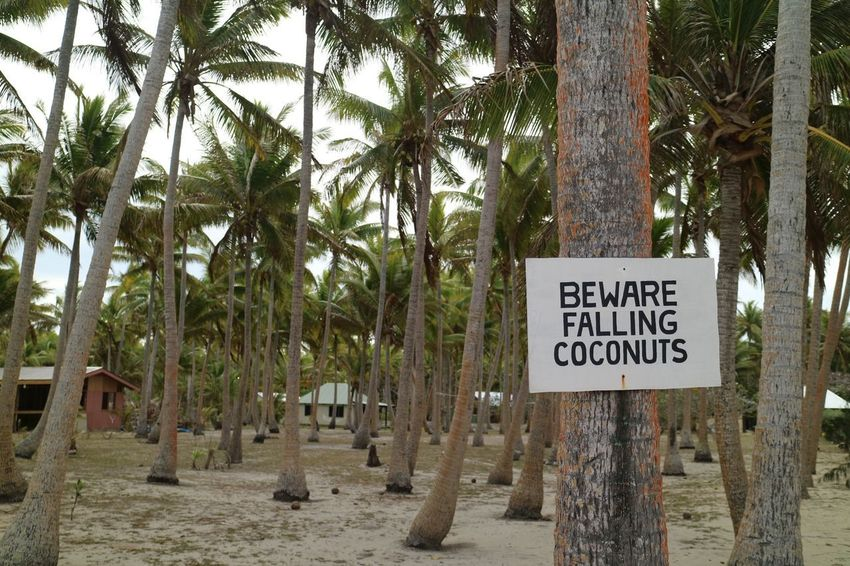 Coconut beach Sign Coconut Tree Text Tropical Climate Palm Tree Communication Plant Western Script