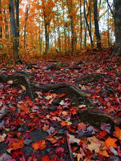 Autumn leaves on ground in forest