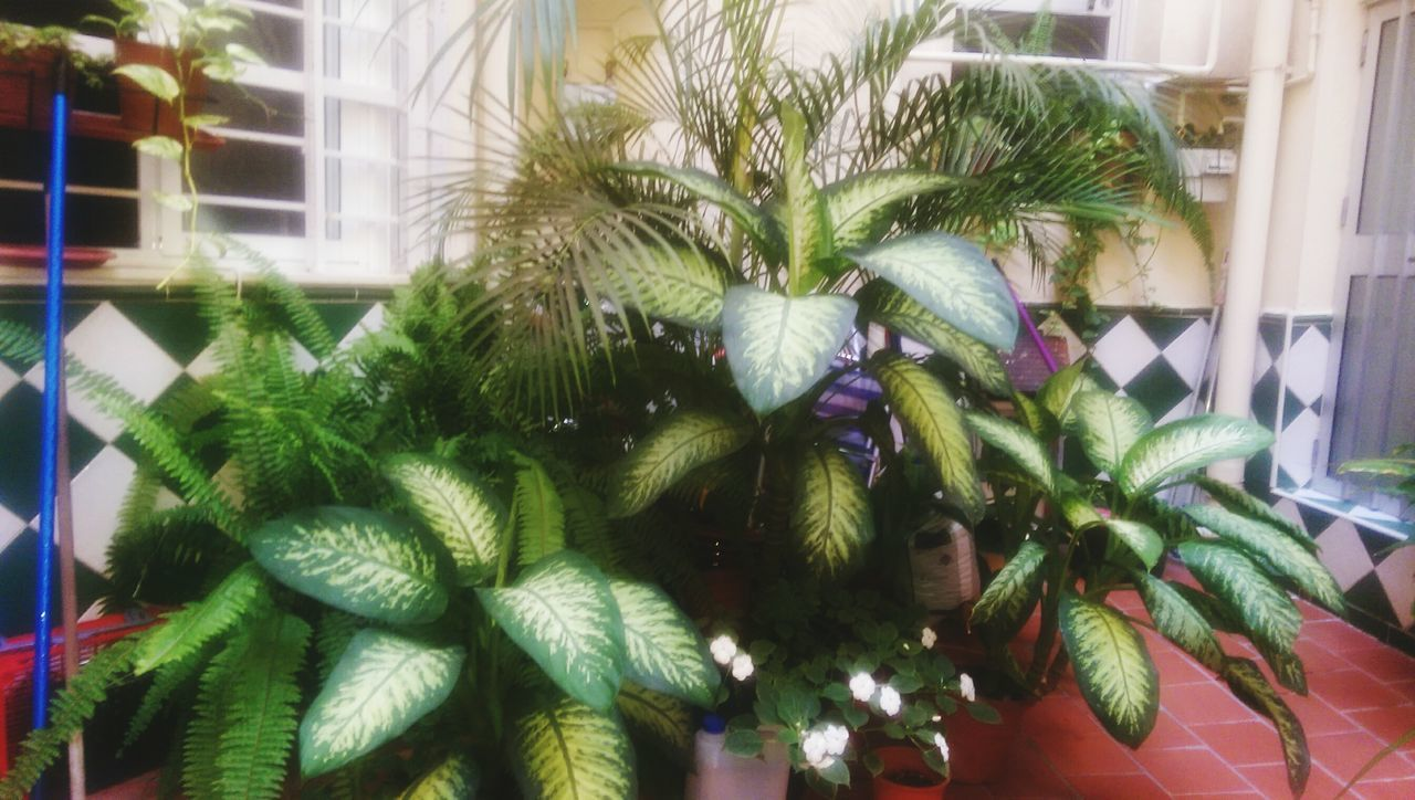 green color, growth, plant, leaf, potted plant, christmas, no people, indoors, close-up, celebration, home interior, nature, christmas tree, christmas decoration, flower, beauty in nature, day, freshness, fragility, tree, flower head