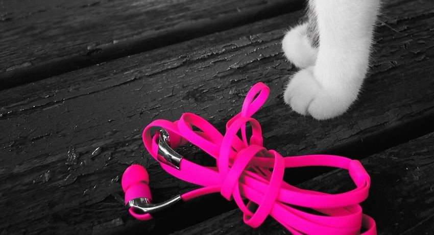 Pink Color Close-up No People Day Cat Outdoors