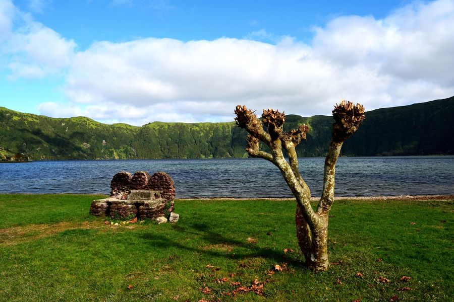 Idyllic Scenery Idyllic Parkbank Baum Island Portugal Açores Nature Sky Cloud - Sky Scenics Beauty In Nature Grass Water Lake Tranquility Mountain No People Growth Tranquil Scene Outdoors Landscape Tree Day