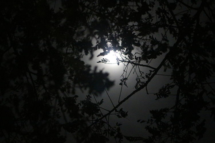 Atmosphere Beauty In Nature Botany Branch Full Moon Above Tree Glowing Growth Leaf Low Angle View Majestic Nature Outdoors Tranquility Tree