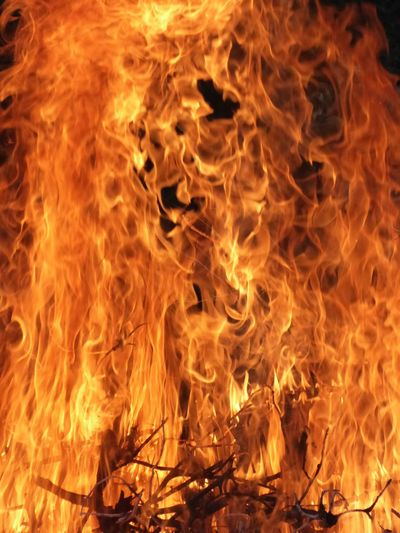 fire Branch Bushfire Fire Flame Hot Temperature