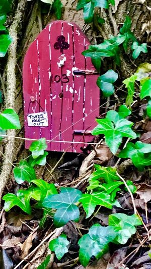 Fairy House Fairy Door No People Ivy Outdoors Close-up Wood - Material Yorkshire Kirk Smeaton, Yorkshire