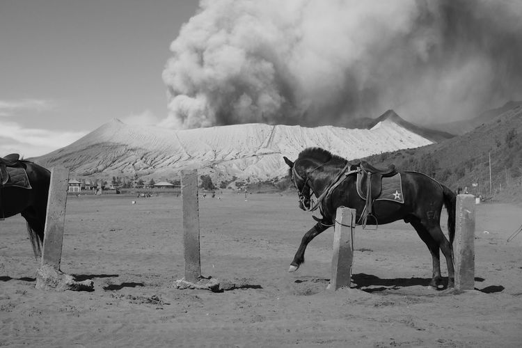 Black horse with dramatic volcano smoke background. Air Pollution Animal Themes Arid Climate Day Desert Domestic Animals Geology Horse Landscape Mammal Mountain Natural Disaster Nature No People Outdoors Smoke - Physical Structure Working Animal