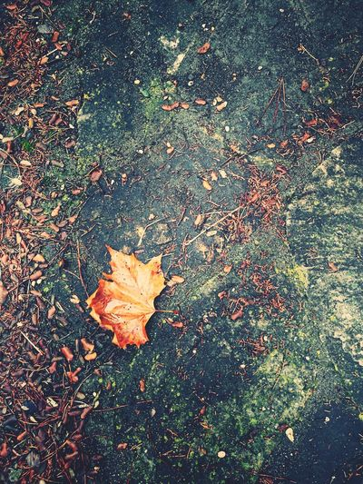 Leaf No People Outdoors Leaf On The Floor Fragility Day Minimalism Minimalism Photography Minimalist Photography  Textures And Surfaces Pavement Winter Wintertime Tranquillity Calm Tranquil Scene Beauty Gift Of Nature Beauty On Nature Beauty Of Nature Backgrounds Fallen Leaf OpenEdit