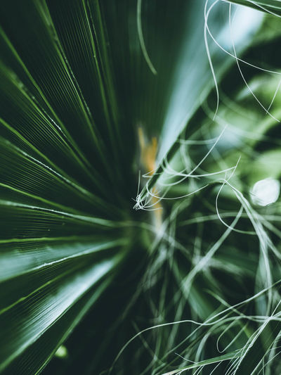 Palmtree Green Focus Igtones Picoftheday MoodyTones Closeup Nature Bokeh Greenleaves🌿 Garden Colorfull Light Flower Leaf Italy Autumn Moody Complexity Backgrounds Full Frame Concentric Close-up