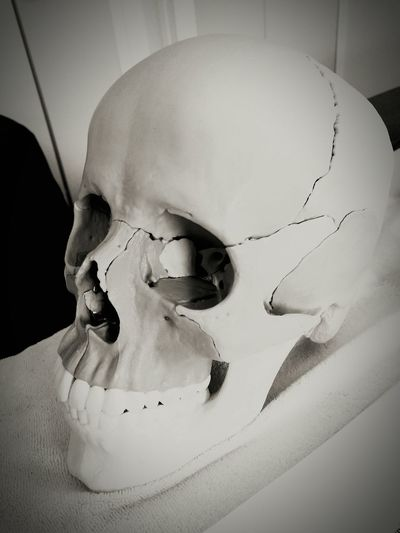 Human Body Part Skull Ostéopathie Studies School Blackandwhite Human EyeEm Vision