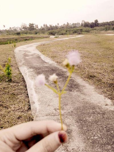 The EyeEm Facebook Cover Challenge Flowers Throwback ✌