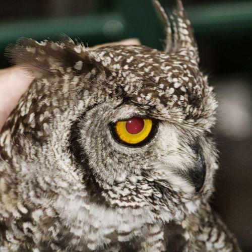 One Animal Animal Animal Photography Hibou Naturlovers A New Beginning