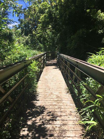 Eyeemphoto Paradise Pivotal Ideas Maui Haleakala, Hawaii Trail To Bamboo