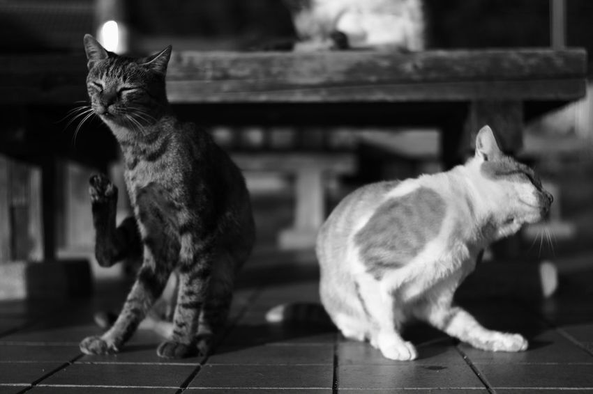 Two of us Relaxing B & W Photography B & W  Black And White Photography Black And White Enjoying Life Japanese  Japan My Photography Voightlander Nokton Classic 40mm/F1.4 SC Voigtlnder Street Cats Street Cat Cat Fujifilm X-Pro1 Cats X-Pro1