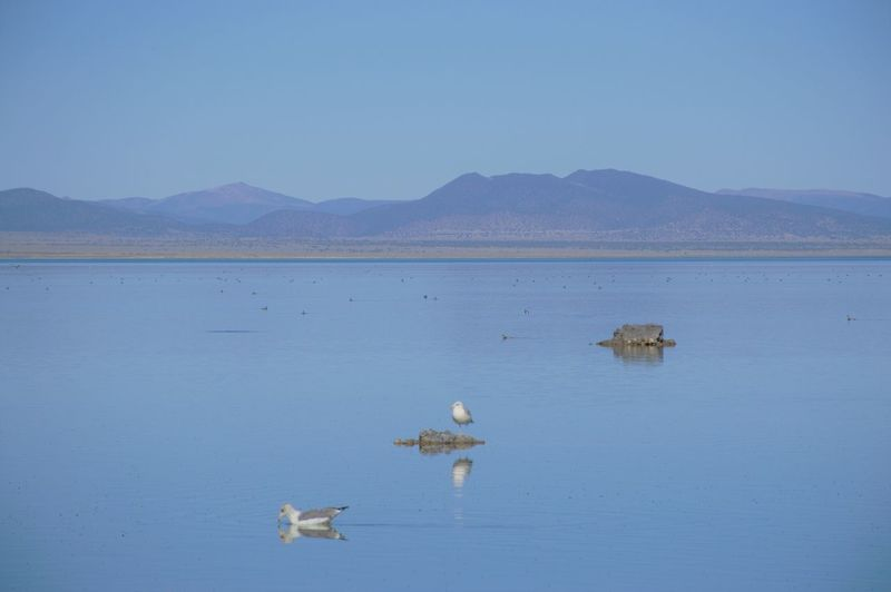 View of birds in lake against mountain range
