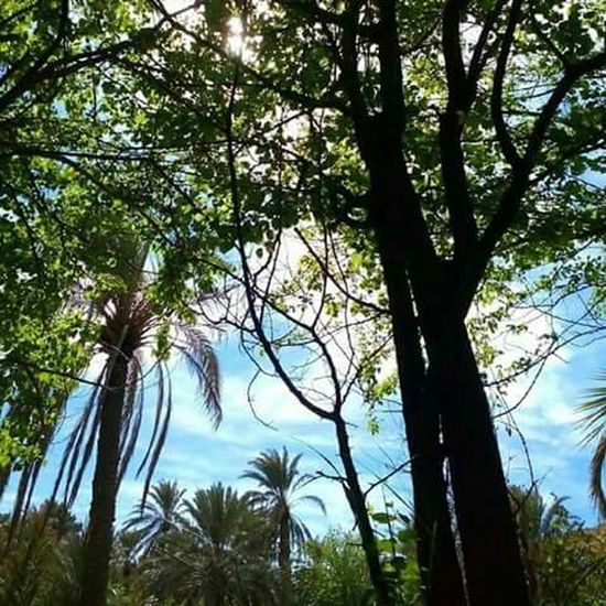 النخل السماء قيلولة Sky Nature Palms Trees Green Wonderful Oasis