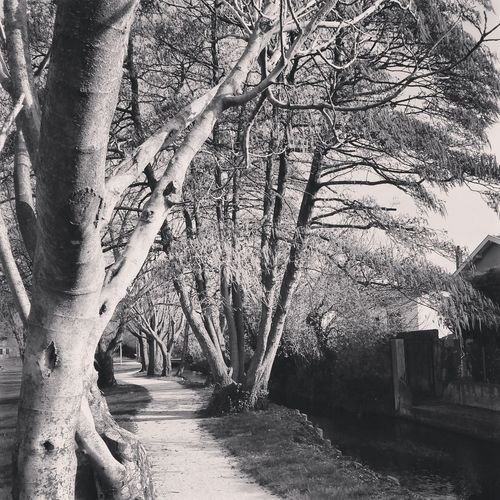 Taking Photos Walking Around Path Bnw Blackandwhite Photography Trees Nature Black & White Blackandwhite Black&white Black And White