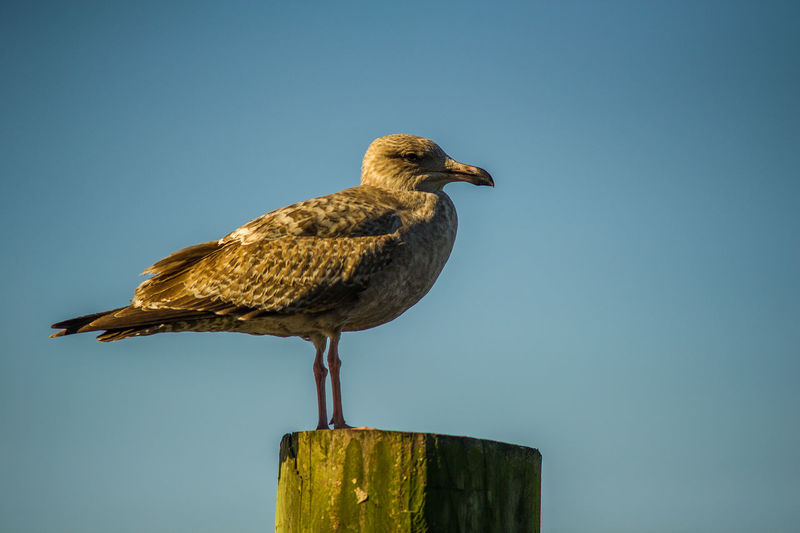 Bird in the