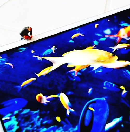 Aquarium Ipad Fish Water Aquarium Tyni People EyeEmNewHere Low Angle View Men Mobile Conversations Bordeaux Day Domestic Life Minimalism Miniature A New Perspective On Life