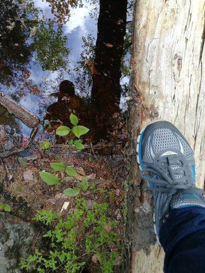 Who are you?! Reflection Mypointofview Forest Nature Low Section Human Leg Tree Shoe Standing High Angle View Personal Perspective Human Foot Close-up