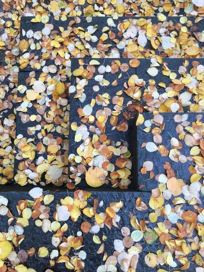 High angle view of autumn leaves floating on water