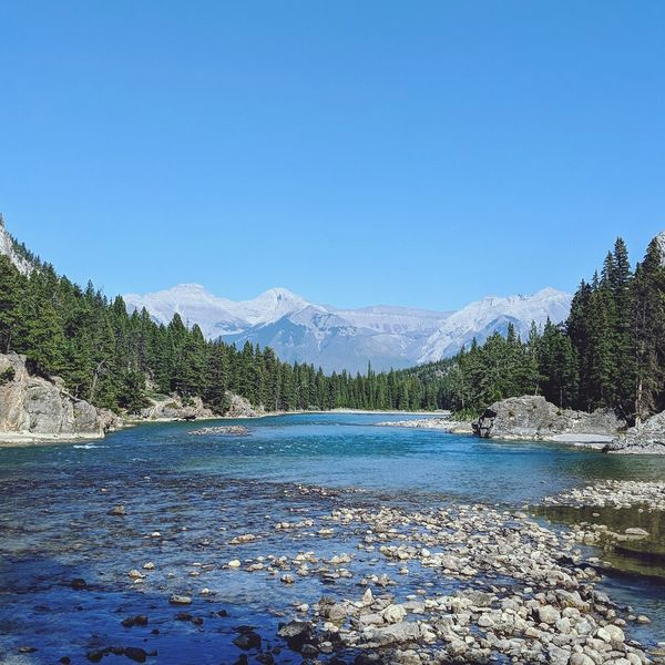 Bow River Tree Water Clear Sky Mountain Snow Lake Forest Pinaceae Blue Pine Tree