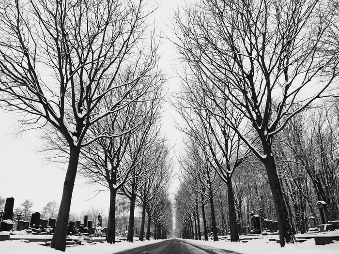 Cemetery Cemetery Photography Blackandwhite Bnw_collection Streetphotography Nature_collection Snowy Trees Vienna Wien vanishing point Snow Winter Tree Cold Temperature Bare Tree Sky Nature Outdoors Day Branch No People Beauty In Nature City