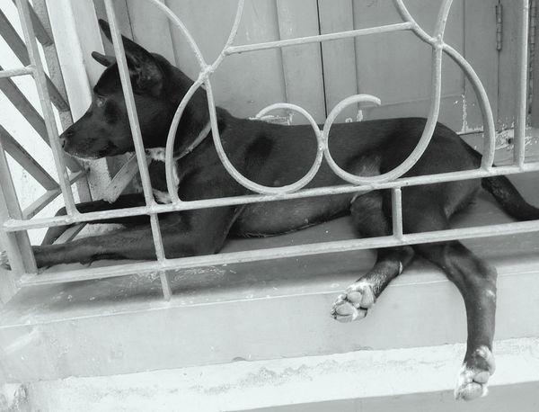 Dog Lover DogLove One Animal EyeEmNewHere EyeEmNewHere