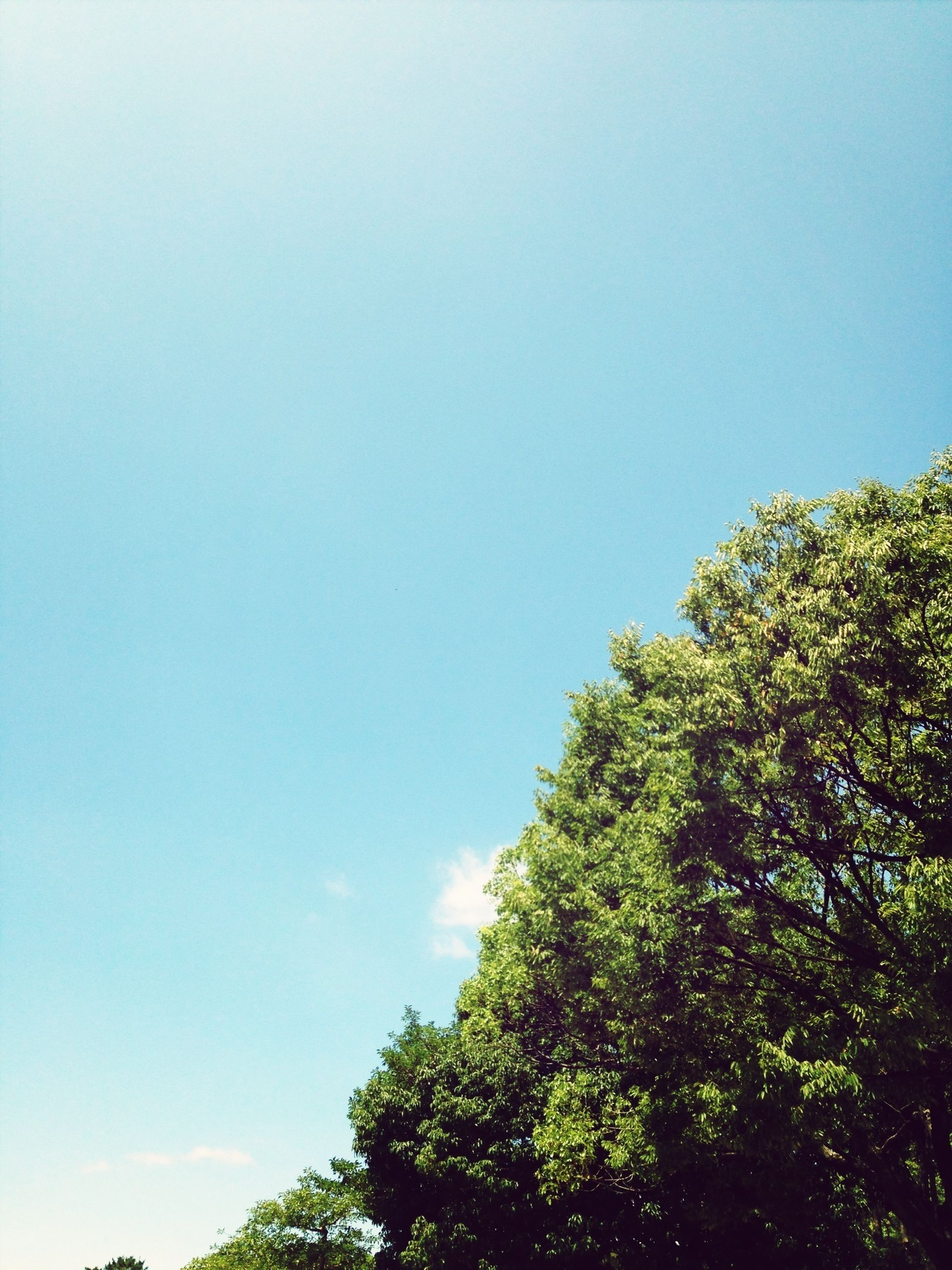 tree, low angle view, clear sky, copy space, blue, growth, beauty in nature, nature, green color, tranquility, sky, high section, treetop, scenics, tranquil scene, branch, day, outdoors, lush foliage, no people
