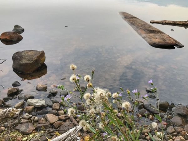 At the edge of a lake, a log and some plants in Oregon Edge Of A Lake Lakeshore Nature Rock - Object Day No People Outdoors Sea Beauty In Nature Water Tranquil Scene Tranquility Scenics Sky