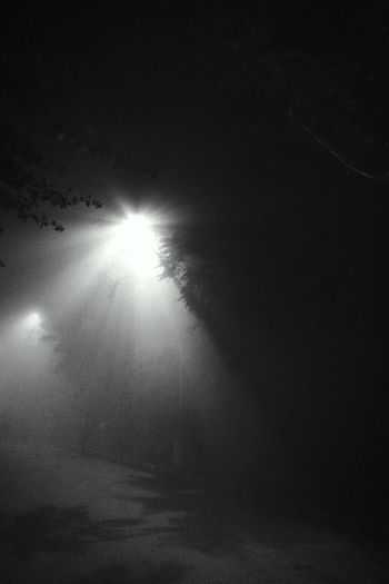 Blackandwhitephotography Night Lights Foggy Night Refreshment Light In The Darkness Light Reflection Amazing Rays IPhoneography Nature Tree Cold Temperature Roadsidephotography Roadlamp Roadtoheaven