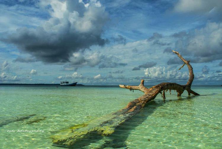 Driftwood On Sea Against Cloudy Sky