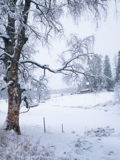 Scenic winter landscape with leafless silver birch and horse farm at cloudy day in Finland Snow Winter Cold Temperature Tree Plant Beauty In Nature Nature White Color Tranquility Tranquil Scene Branch No People Outdoors Day Scenics - Nature Bare Tree Tree Trunk Landscape Christmas Atmospheric Mood Horse White Snowing Beauty In Nature Birch