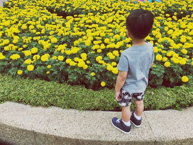 Flower Yellow Childhood One Person Full Length Day Outdoors Plant Casual Clothing Growth Nature Real People Lifestyles Beauty In Nature Flowerbed Fragility People