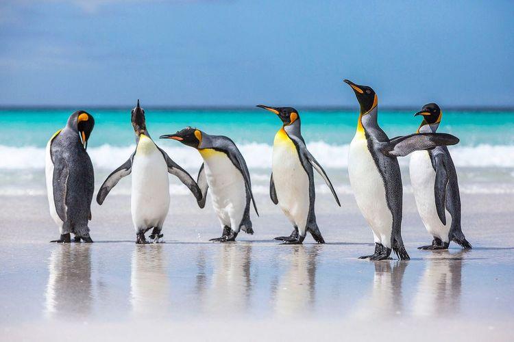 Penguins at beach against sky