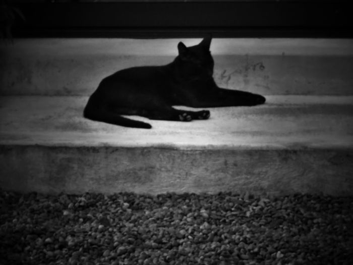 2017/6/26 街拍獵影~貓•影 於藍晒圖文創園區 Taiwan Bw Bw_lover BW_photography B&w Photo B&w Bw Photography B&w Photography Bwphotography Streetphotography Street Street Photography Streetphoto_bw Street Scene Streetphotography_bw b&w street photography Domestic Cat Animal Themes Cat EyeEmNewHere
