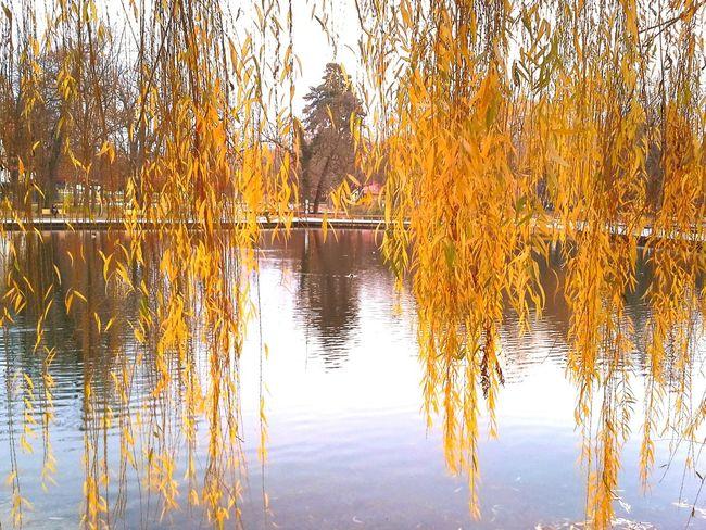 Autmn ősz Swinging Rocking Barna Autumn Colours Autumn Leaves Colours Of Nature Relaxing Colours Colours Of Autumn Nature Relax Braun Yellow Plant Outdoors Autumn