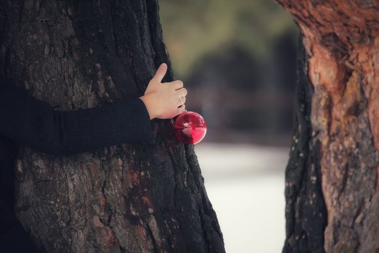 Cropped Hand Of Woman Holding Bauble While Embracing Tree Trunk