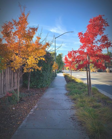 """Yellow Tree! Red Tree!"" A suburban path traverses between conflicting Autumn colors simulating a prepare to stop and a full stop. Metaphor Path Fall Colors Autumn colors Suburban Exploration Tree Sky Growth Nature Autumn No People The Way Forward Footpath City Cloud - Sky"
